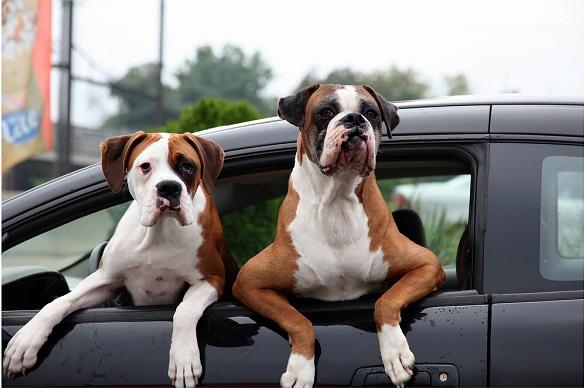 особенности путешествия с собакой